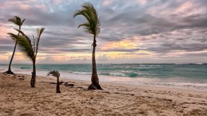 windy beach with palm trees in sunset