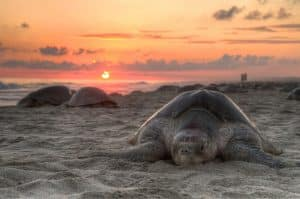 Every day at the sunset, you will be able to see sea turtles resting on the beach!