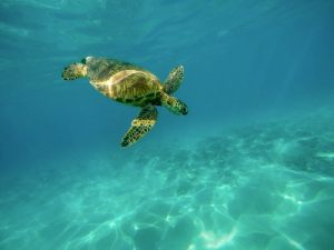 a turtle swimming in the water