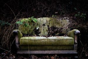 Old sofa covered with ivy